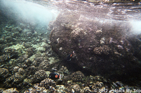 picture of coral reef fish
